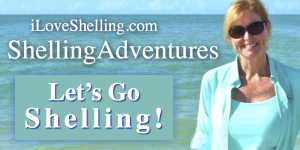 shelling adventures pam me