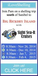 sight sea-r adventures feb 2015