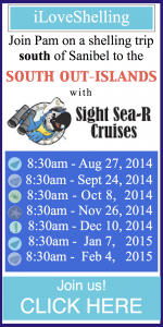 sight sea-r shelling adventures 2014 2015
