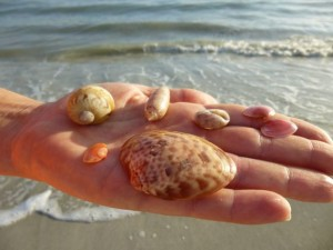 susan seashells sanibel florida