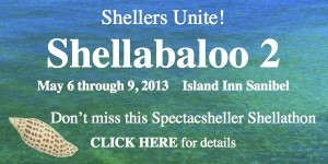 Island Inn Shellabaloo 2