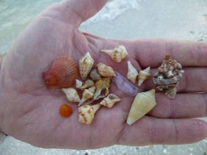 clark mini seashells
