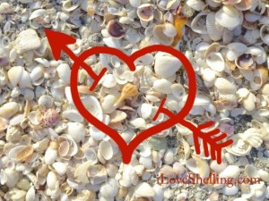 i love shelling heart iLS