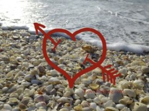 i love shelling heart