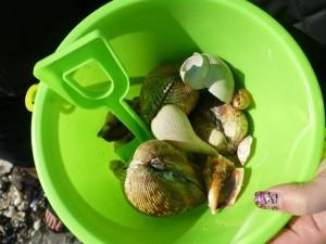 kayle seashells