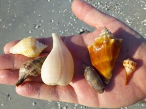 ken seashells sanibel