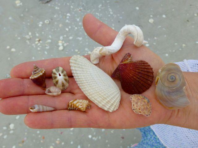 Pen Shells and Beach Bling