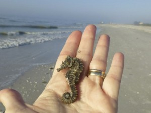 sanibel sea horse beach