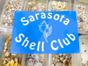 sarasota shell club show
