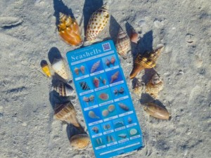 seashell beach guide