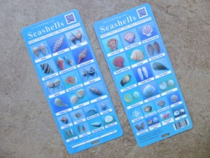 seashell identify field guide