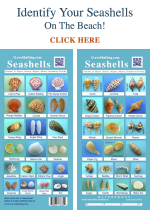 Identify Seashells Guide