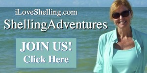 seashell shelling adventures pam