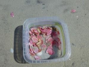 box rose petal tellins