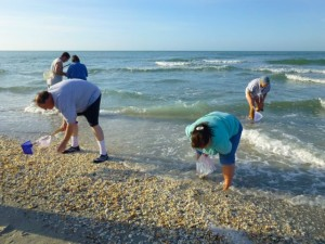 collecting seashells sanibel island