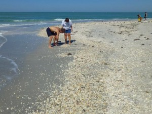 collecting seashells seashore sanibel