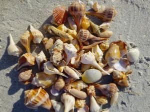 darlene seashells