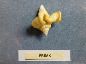 freak fighting conch