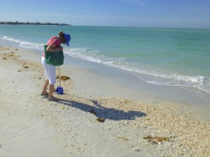march shell collecting cayo costa florida