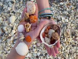 sanibel island florida seashells