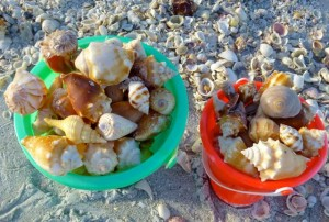 sanibel seashell buckets full