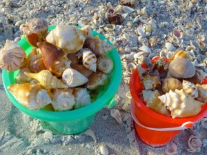 sanibel shell buckets beach