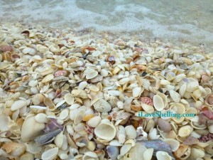 seashells and surf iLS
