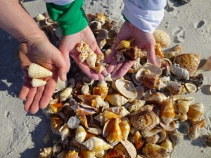 seashells found sanibel island florida