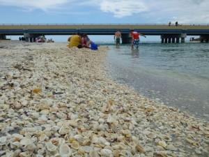 seashells under bridge sanibel