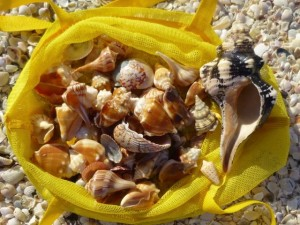 seashells yellow bag sanibel florida