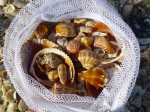 shell bag collection