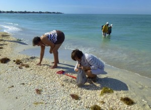 shelling gleaners cayo