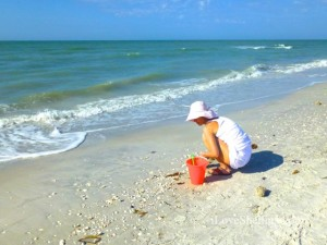 Sanibel stoop shelling april