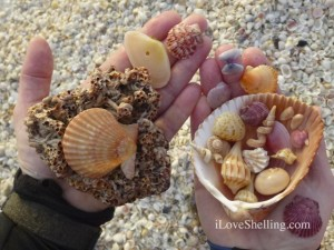 jude sanibel seashells