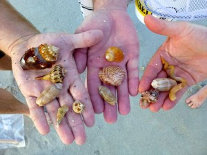brett cleveland seashells from Sanibel