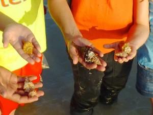loulie fam shells