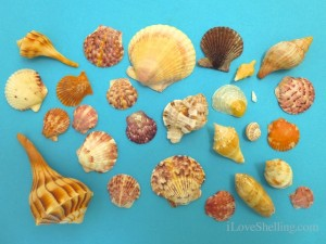 sanibel seashells lighthouse april 2013