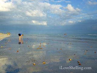 sanibel stoop tarpon beach