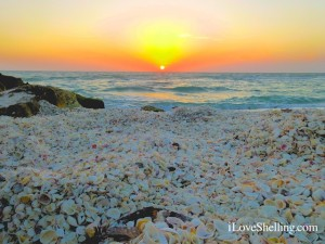 sea shells sunset florida