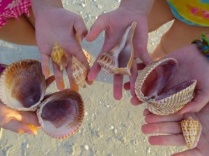seashells found sanibel island