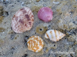 shells jetty rock captiva