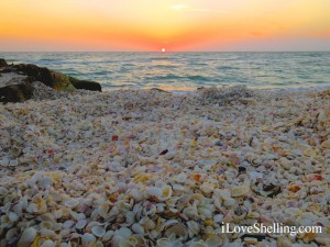 sunset horizon captiva island florida seashells