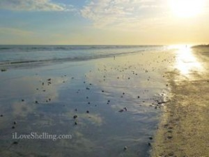 tarpon beach low tide sunset