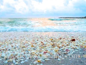 Colorful Sanibel seashells