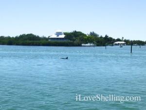 dolphin useppa island