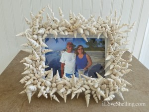worm shell frame sanibel