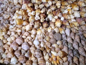 Sanibel Seashells Wendy Gerry