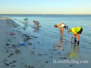 Shellabaloo finding wentletraps sanibel