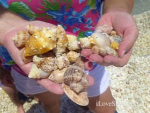 find seashells florida