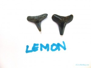lemon shark fossil tooth